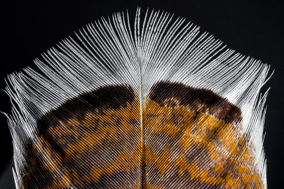 Spring, Bird Feather, Turkey Feather