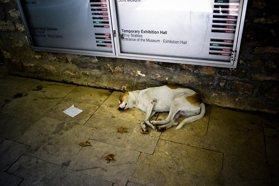 Dog, Turkey, Ground, Night, Sleep