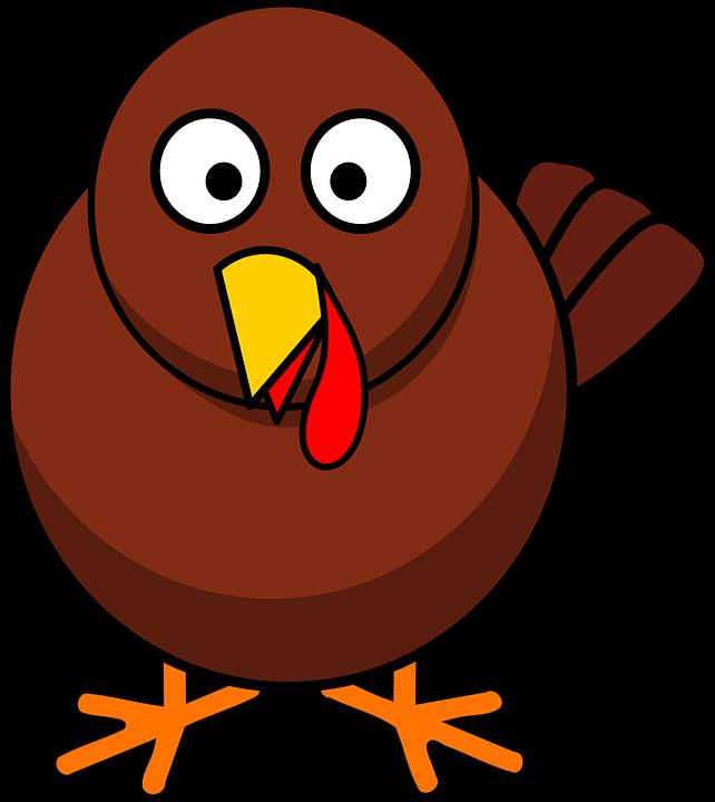 Turkey, Bird, Animals, Thanksgiving, Holiday, Nature
