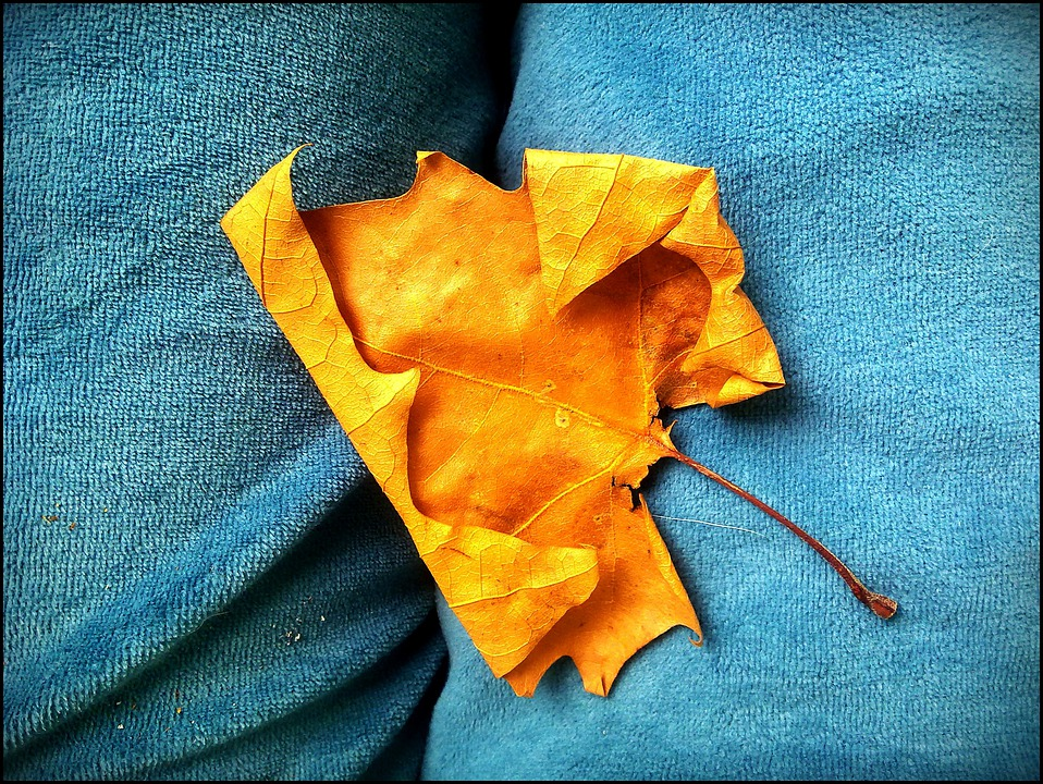 Autumn, Leaves, Golden Autumn, Colorful, Turquoise