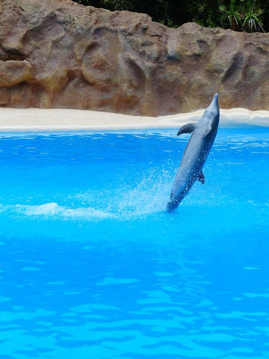 Bottlenose Dolphin, Dolphin, Jump, Tursiops Truncatus