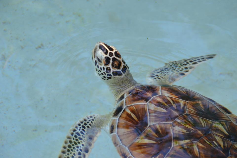 Turtle, Nature, Wildlife, Animal, Water