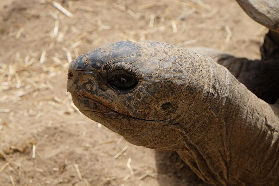Turtle, Head, Close Up