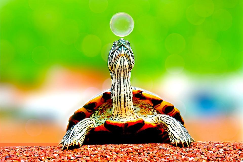Animal, Bubble, Cute, Macro, Reptile, Turtle