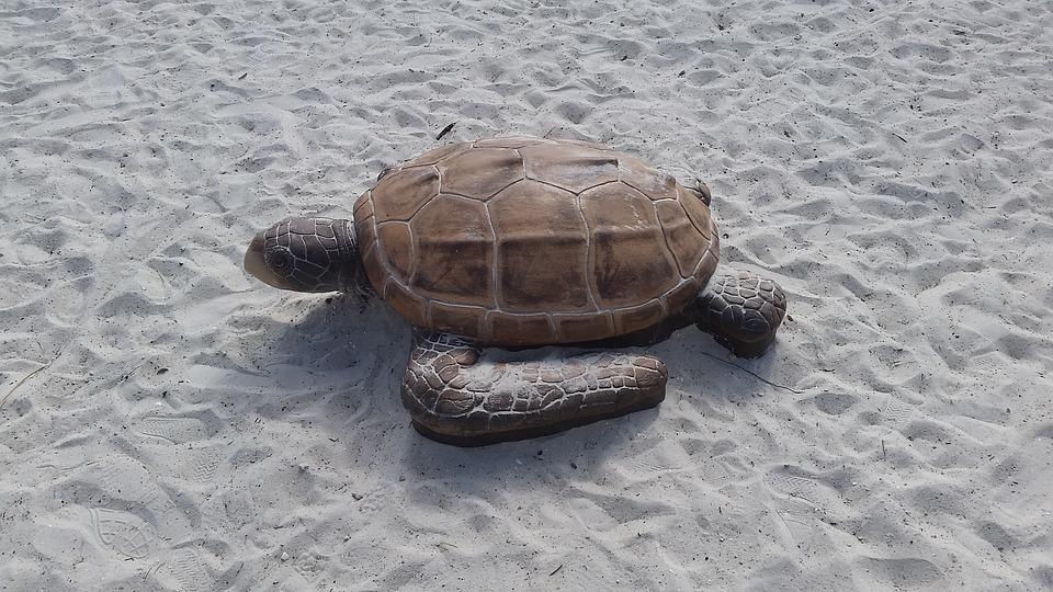 Turtle, Sand, Ft Myers Beach