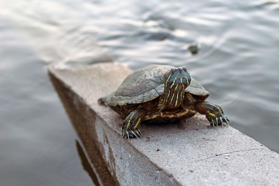 Turtle, Nature, Exoskeleton, Animalia, Wild Life