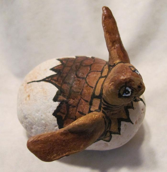 Turtle, Painted Stones, Loggerhead, Loggerhead Turtle