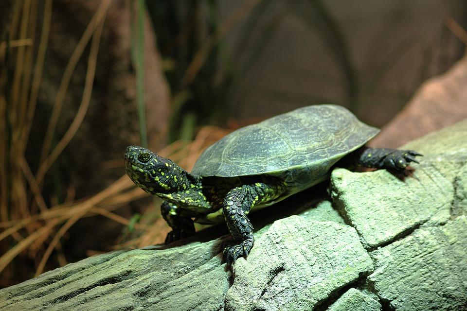 Turtle, Animal Nature, Jungle, Animals, Tortie, Zoo