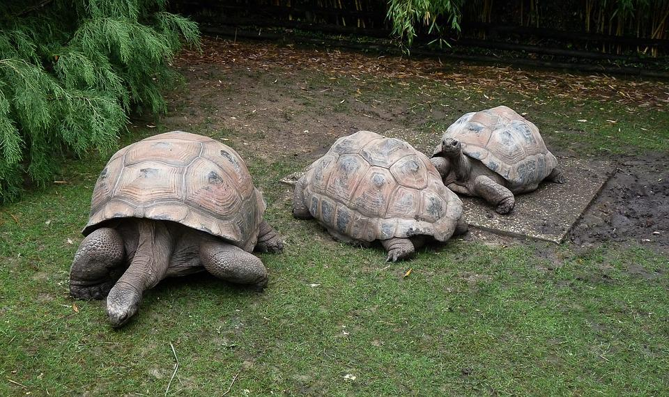 Turtles, Carapace, Scales, Zoo
