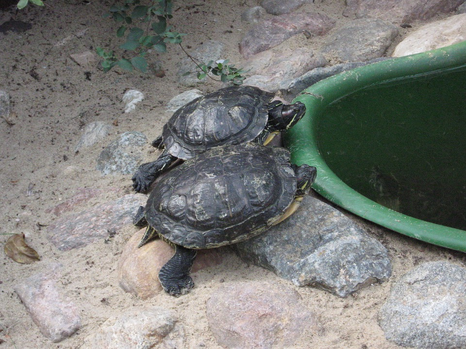 Turtles, Reptiles, Zoo