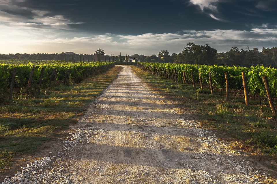 Country Lane, Gravel Road, Tuscany, Way, Path, Grape