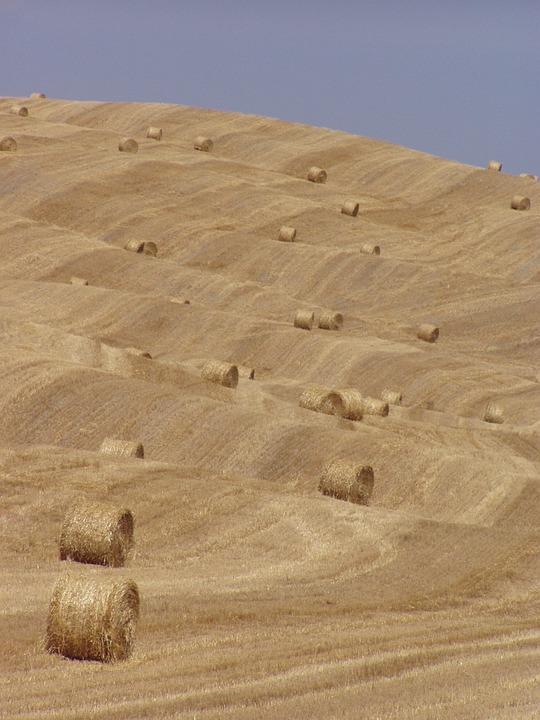 Hay Bales, Hay, Tuscany, Summer