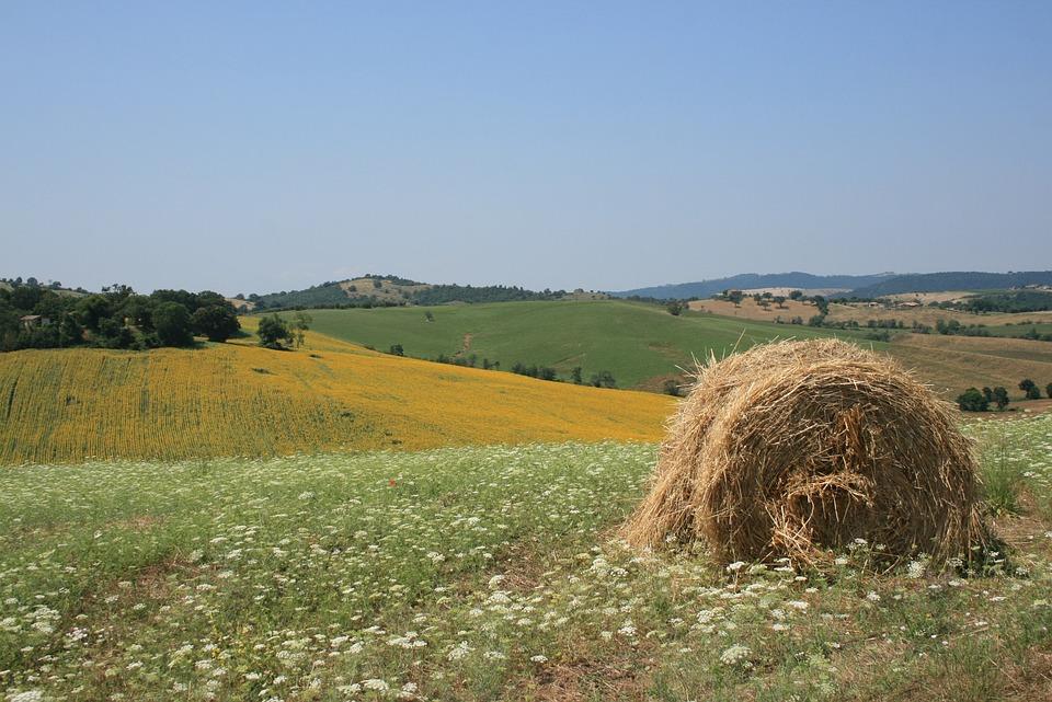 Sun, Maremma, Yellow, Green, Summer, Italy, Tuscany