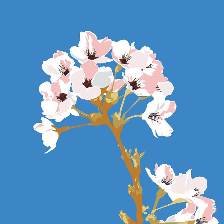 Cherry Tree, Flower, Twig, Spring, Fruit Tree, Flowers