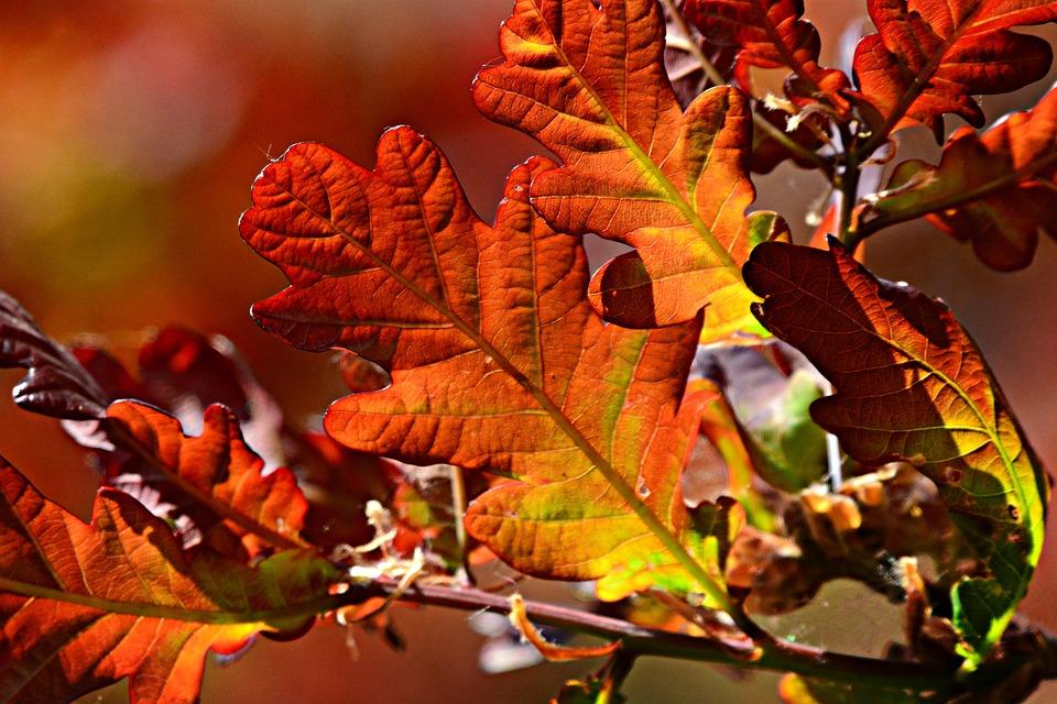 Leaf, Foliage, Vein, Pattern, Twig, Branch, Tree