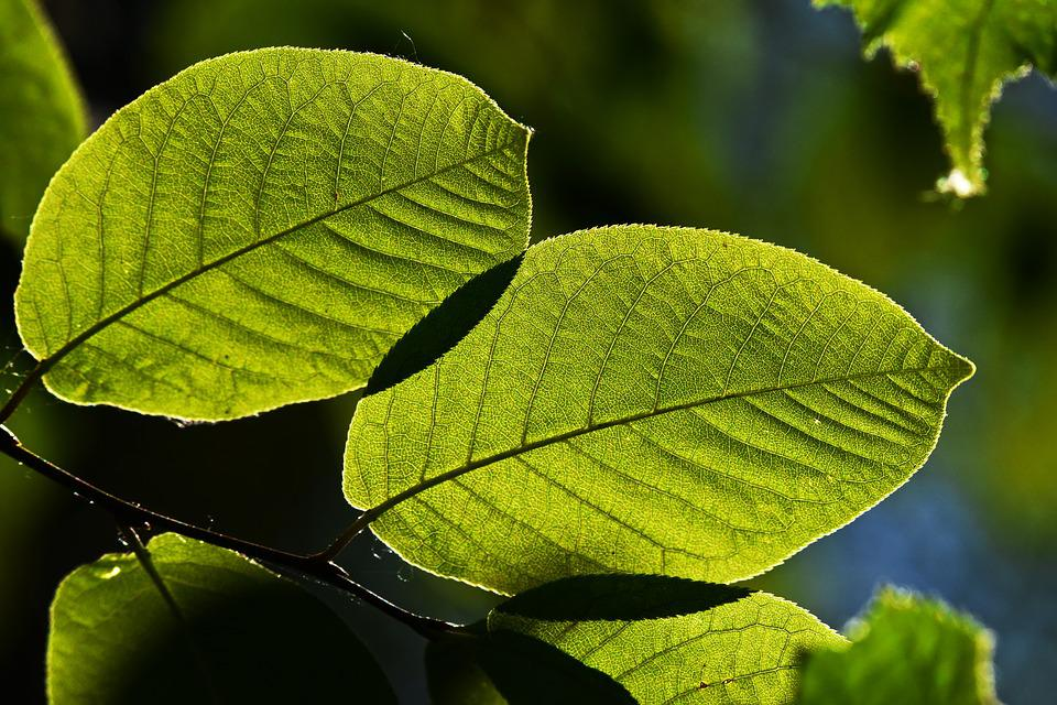 Twig, Leaf, Green, Foliage, Veins, Ecology, Environment