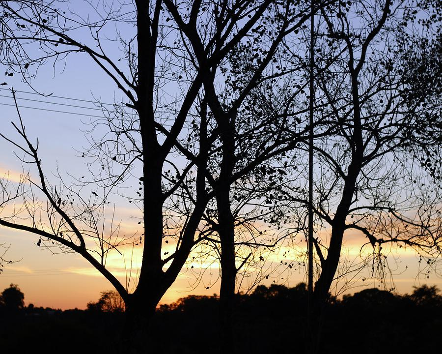 Tree, Nature, Silhouette, Twigs, Trunk, Autumn, Forest
