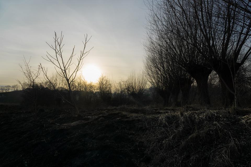 The Sun, Sunset, Evening, Grass, Fire, Twilight