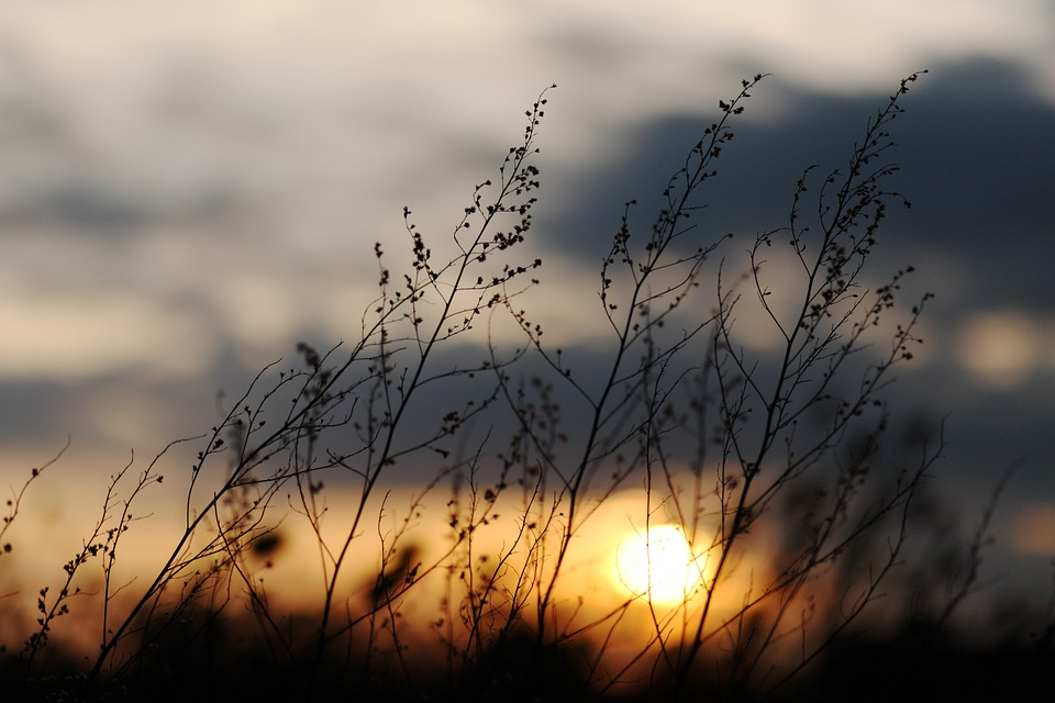 Sunset, Grasses, Twilight, Abendstimmung, Sky, Plant