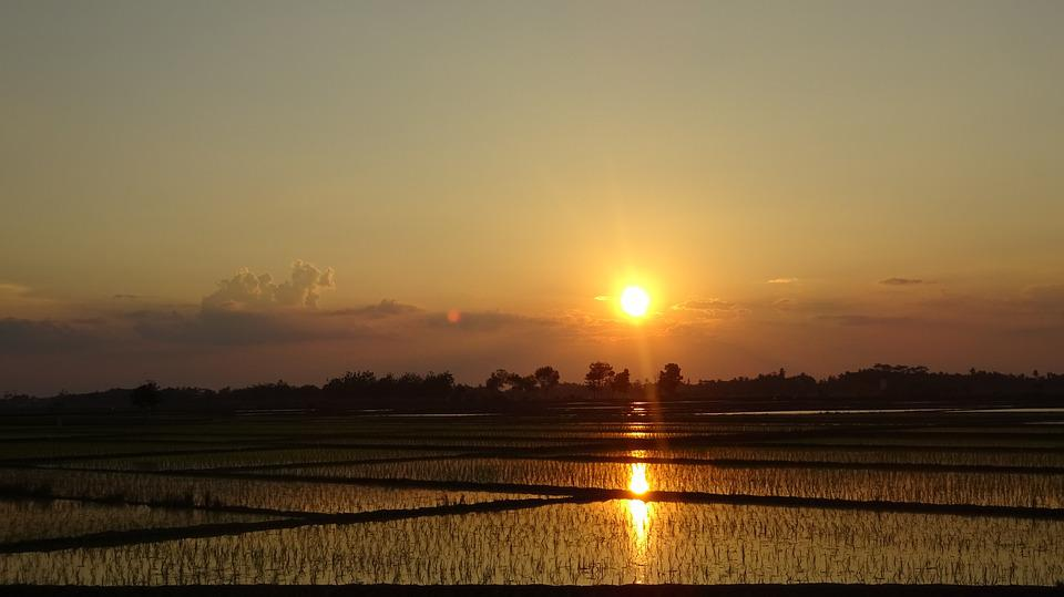 Field, Sun, Sunset, Agriculture, View, Rural, Twilight