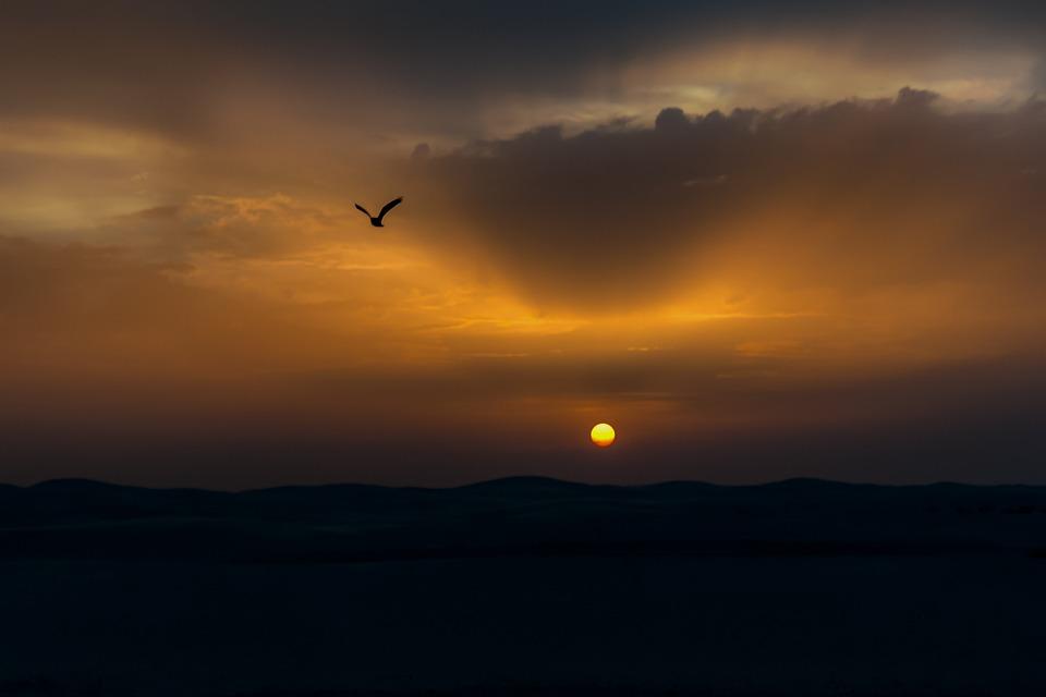 Bird, Sunset, Sun, Twilight, Evening, Freedom, Flying