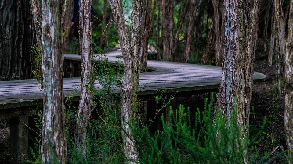 Boardwalk, Trees, Twist, Curved, Wood, Landscape