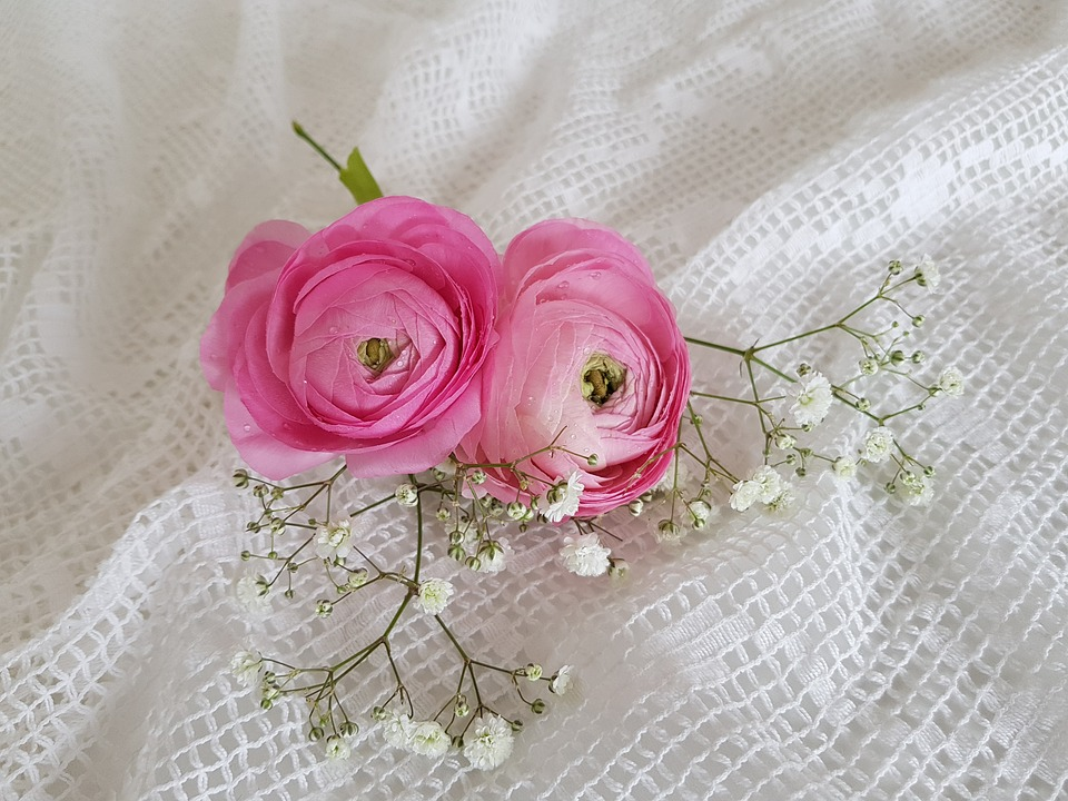 Two Ranunculus, Gypsophila, Pink, White, Tender, Flower