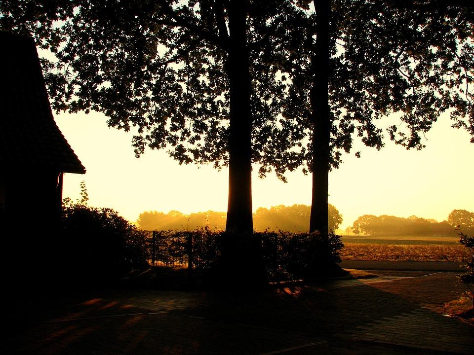 Autumn, Fog, Back Light, Sunset, Light, Two Trees