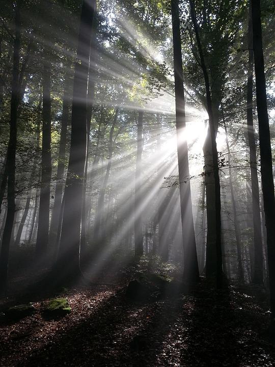 Sunbeam, Rays, Sun, Forest, Tyndall Effect