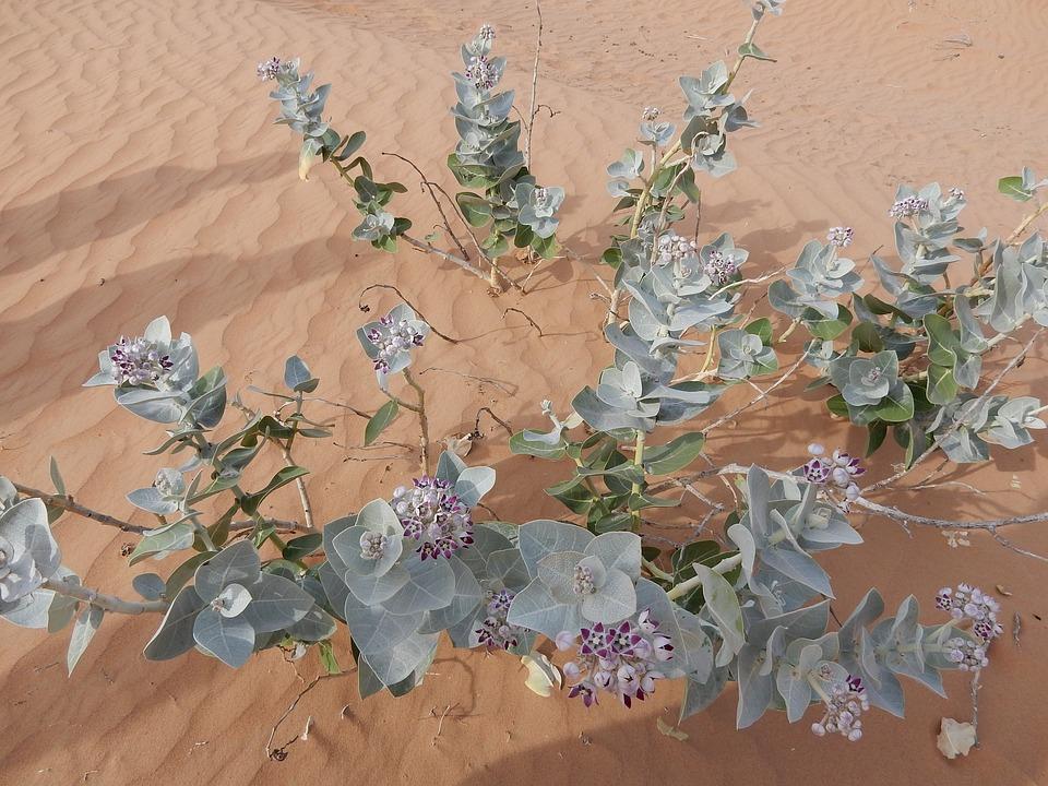 Desert, Emirates, Uae, U A E, United Arab Emirates