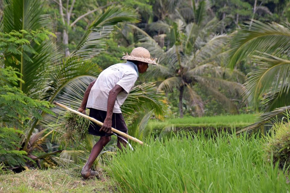Bali, Indonesia, Travel, Ubud, Rice Terraces