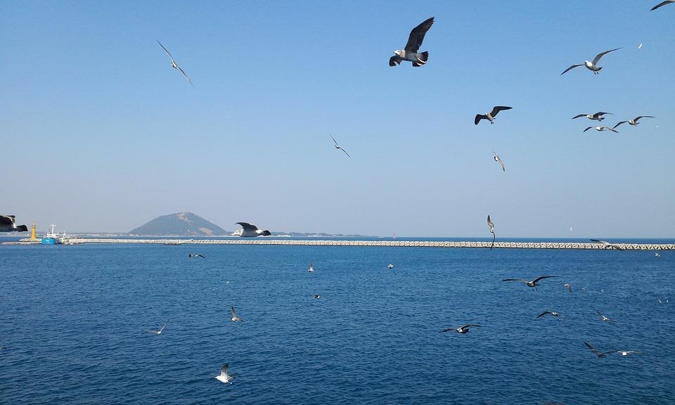Udo, Sea, Seagull