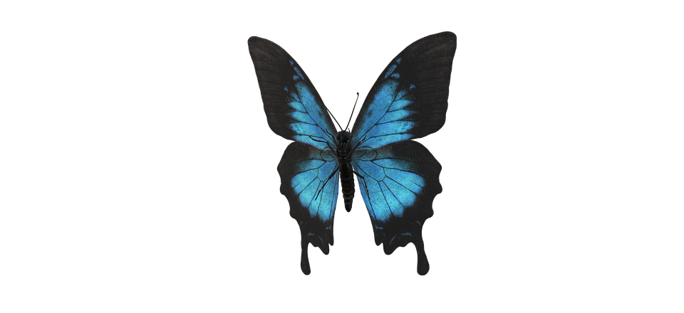 Ulysses Butterfly, Butterfly, Butterfly Wings, Insect