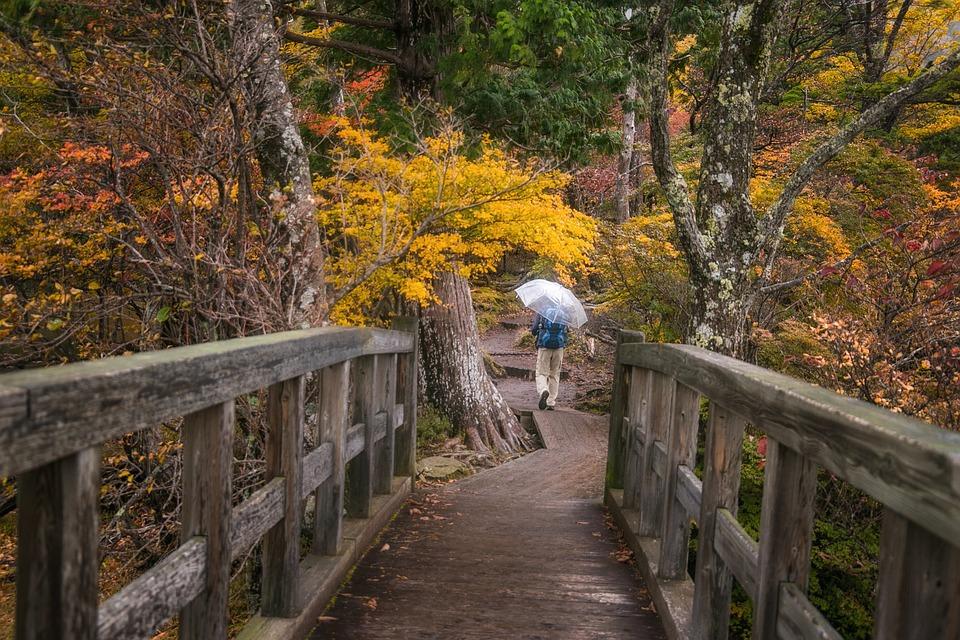 Bridge, Forest, Trees, Leaves, Foliage, Umbrella