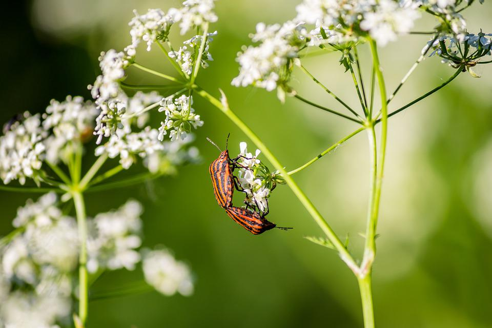 Insects, Pair, Bug, Shield, Umbrella, Plant, Green