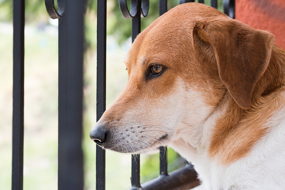 Dog, Puppy, Can, Best Friend, Brown, Unconditional