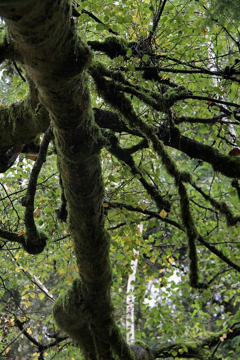 Tree, Under Tree, Mossy Tree