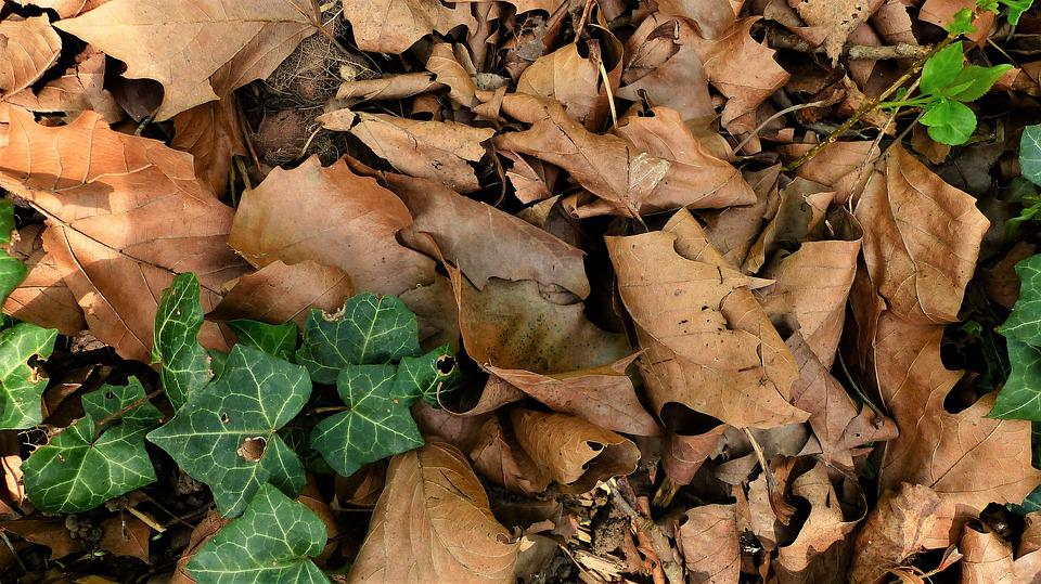 Nature, Leaf, Fall, Wood, Tree, Under Wood, Forest
