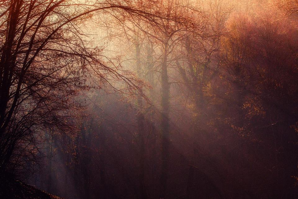 Forest, Atmosphere, Sunrays, Undergrowth, Trees, Gloomy