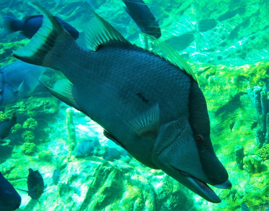 Fish, Seaworld Orlando, Underwater