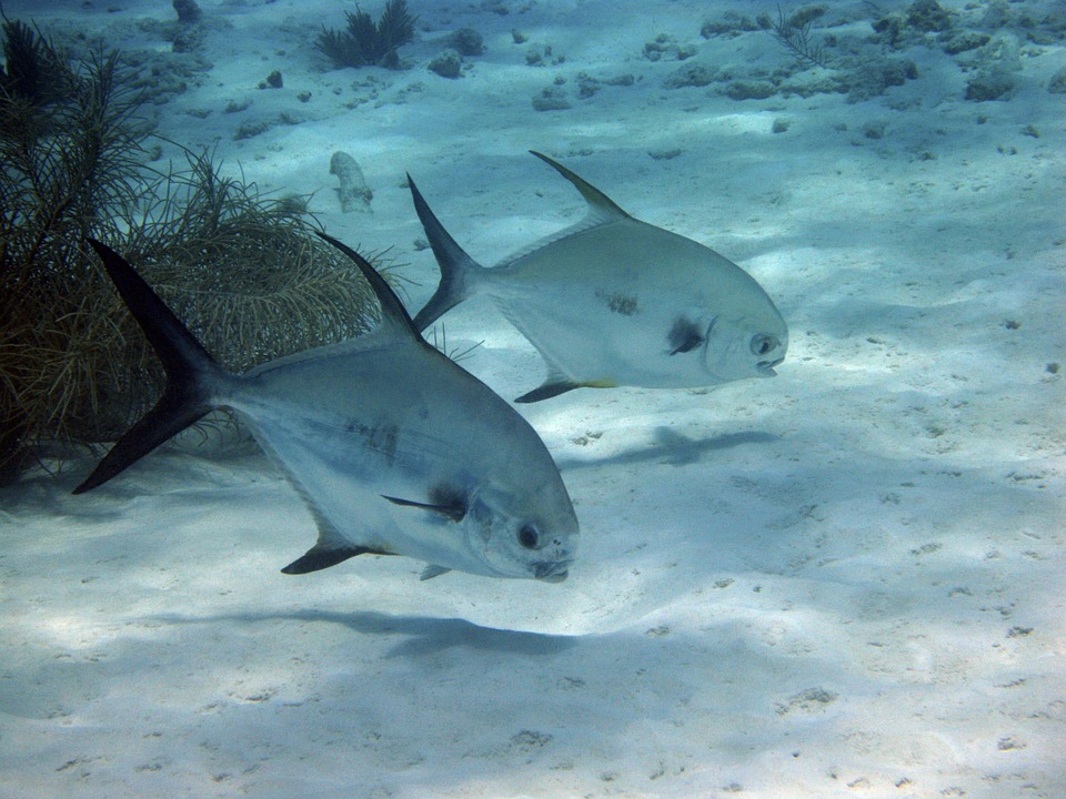 Fish, Underwater, Diving, Swimming, Marine, Tropical