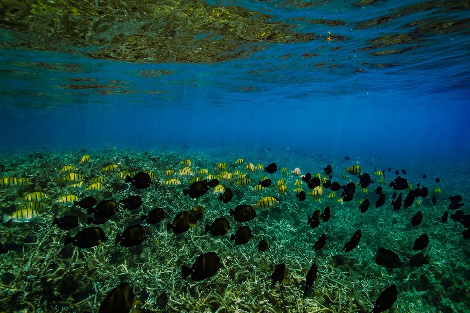 Waters, Nature, Underwater, Marine, Sea
