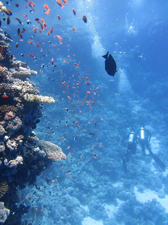 Divers, Underwater, Ocean, Swim, Fish, Coral