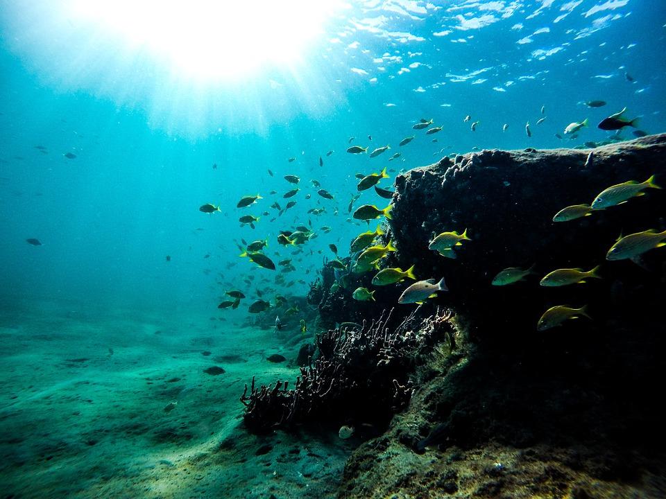 Sea, Fish, Underwater, Ocean, Aquatic, Reef, Undersea