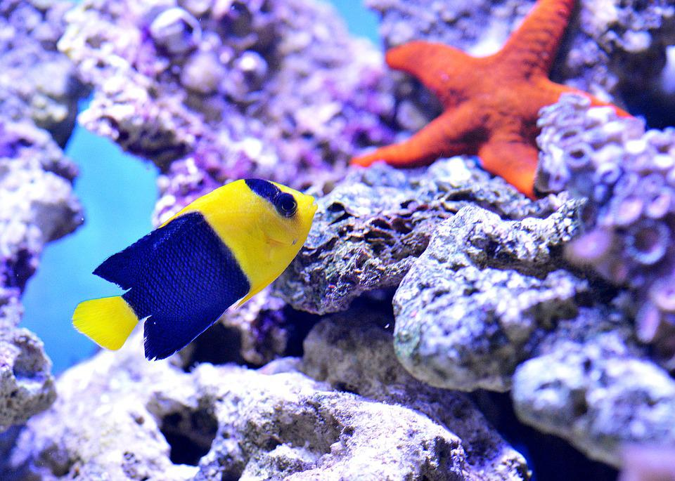 Starfish, Clownfish, Sea, Aquarium, Nemo, Underwater