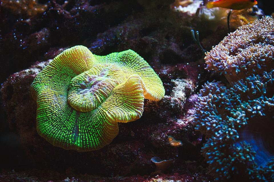 Aquarium, Coral, Nemo, Tropical, Fish, Sea, Underwater