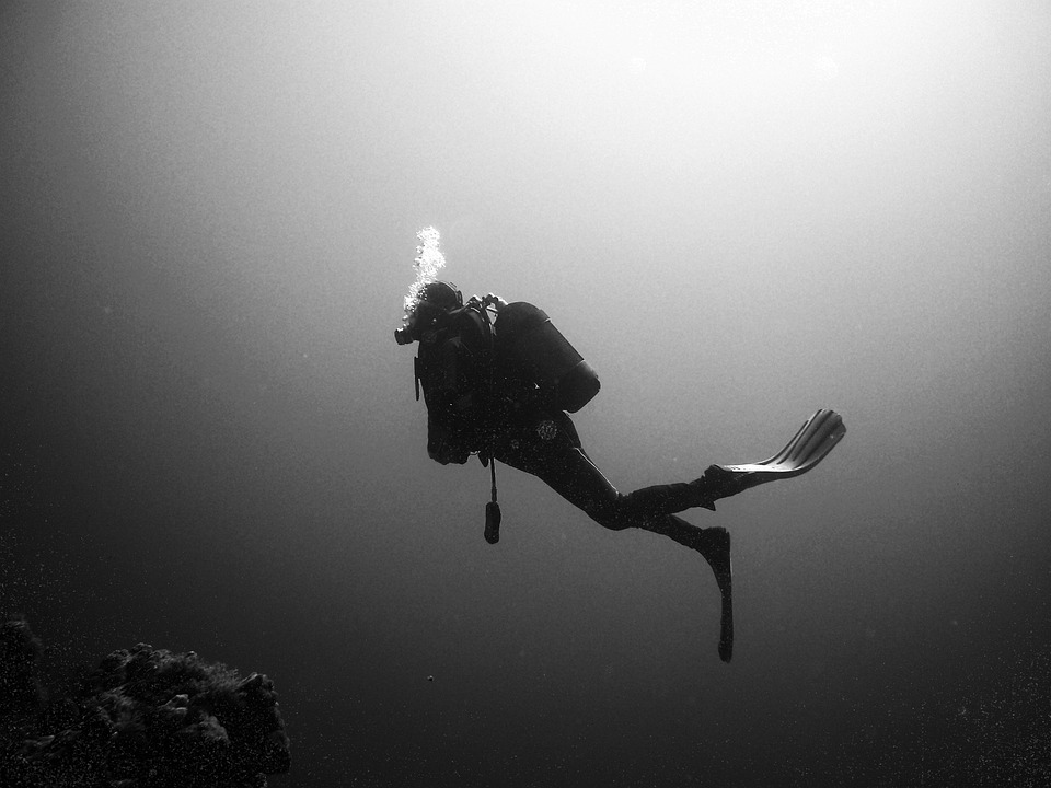 Divers, Diving, Underwater, Water, Underwater World