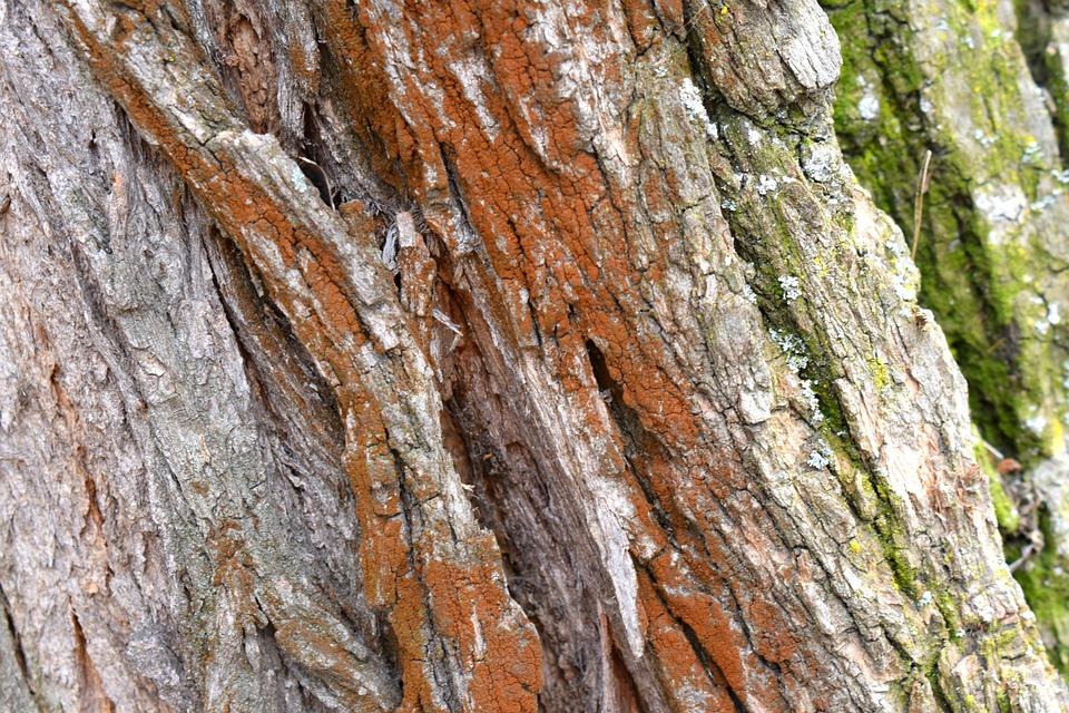 Bark, Background, Texture, Nature, Uneven, Trunk