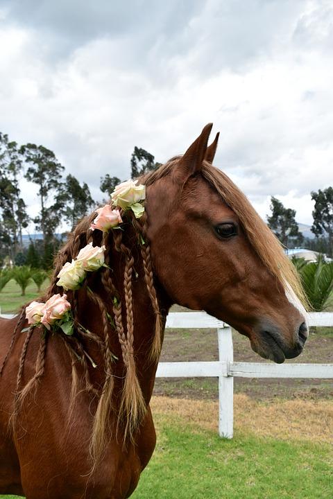 Horse, Roses, Rose, Birthday, Animal, Unicorn, 2020