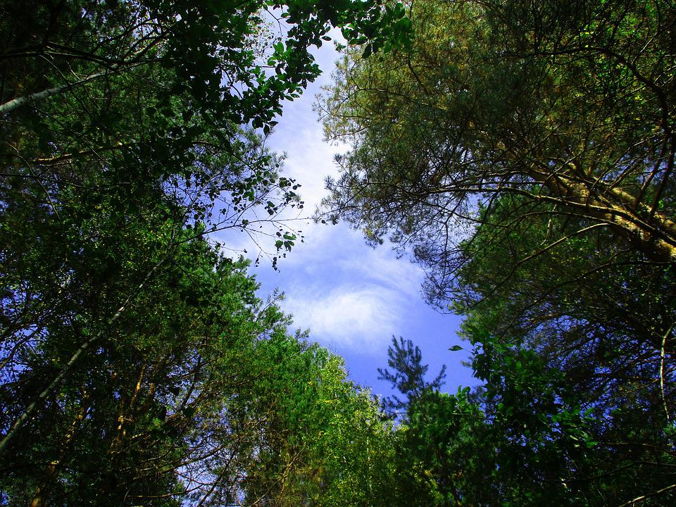 Trees, Forest, Sky, Window, Foliage, Stroll, View, Up